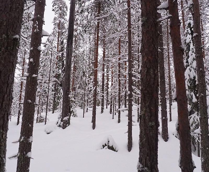 h2-finlandia-3-img