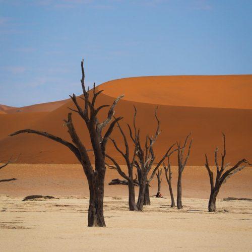 Deadvlei, Sossusvlei Sesriem, Namibia