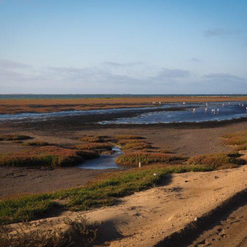 Bird paradise, Walvis Bay, Namibia